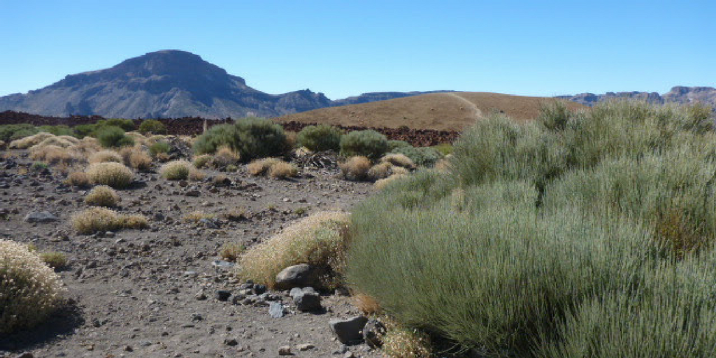 Park Narodowy Pico de Teide